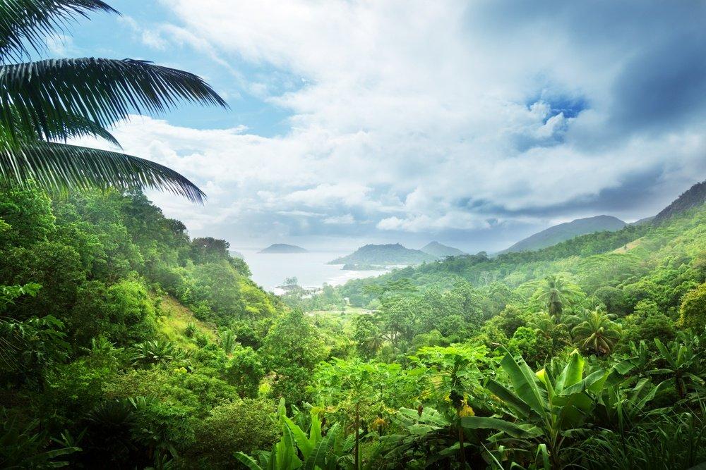 jungle of seychelles island